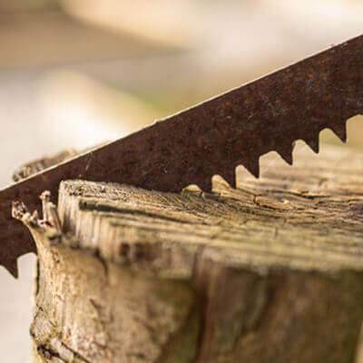 tehnician-silvicultura